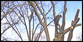 Man Cutting Tree Branches - Tree Removal